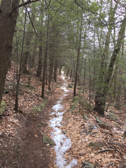 Spruce Gap Trail