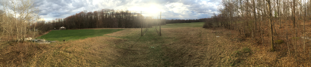 Early Season Hopyard Panorama