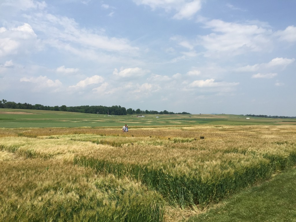 PSU barley trials